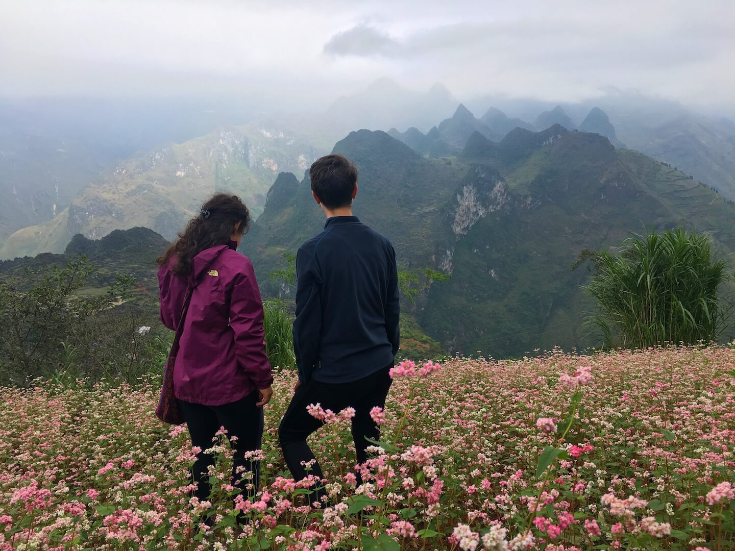Ha Giang Province, Buckwheat Fields | Moon & Honey Travel