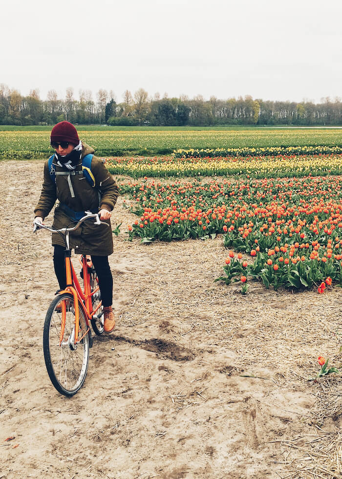 Biking through Tulip Fields in Lisse, The Netherlands | Moon & Honey Travel