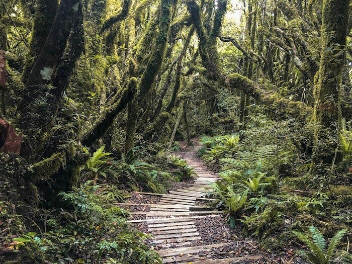 Egmont National Park, New Zealand Hiking Guide | Moon & Honey Travel