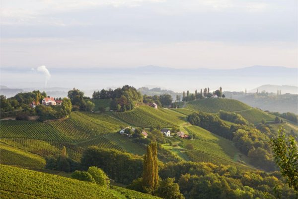 A Beginner's Guide to Wine Tasting in South Styria, Austria