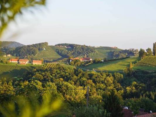 South Styria Fall Wine Tasting Trip